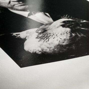 vp fine art printing. Laboratorio professionale di stampa fine art per illustratori, fotografi, tatuatori e artisti. torino.